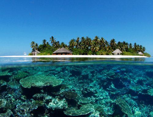 Les Maldives : destination idéale pour faire des photos sous-marines