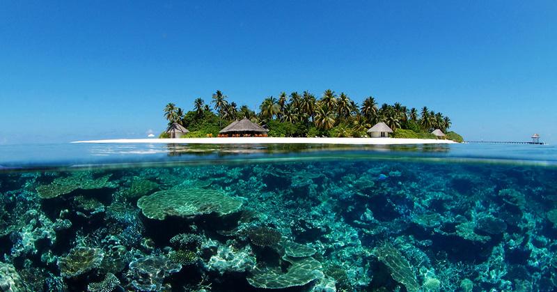 plongée sous marine Maldives